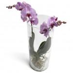 Skicka Blommor - Orkidè